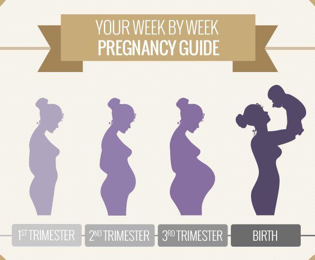 Pregnancy Week By Week  Week 1