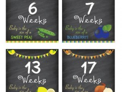 Pregnancy Weeks 6 through 10